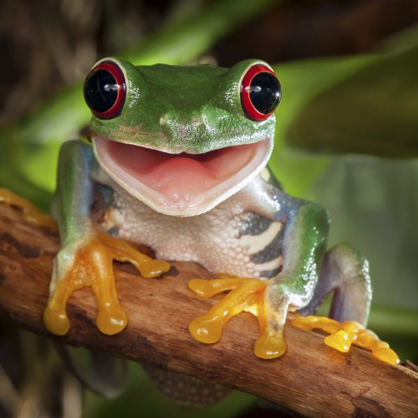 picture of a tree frog almost smiling